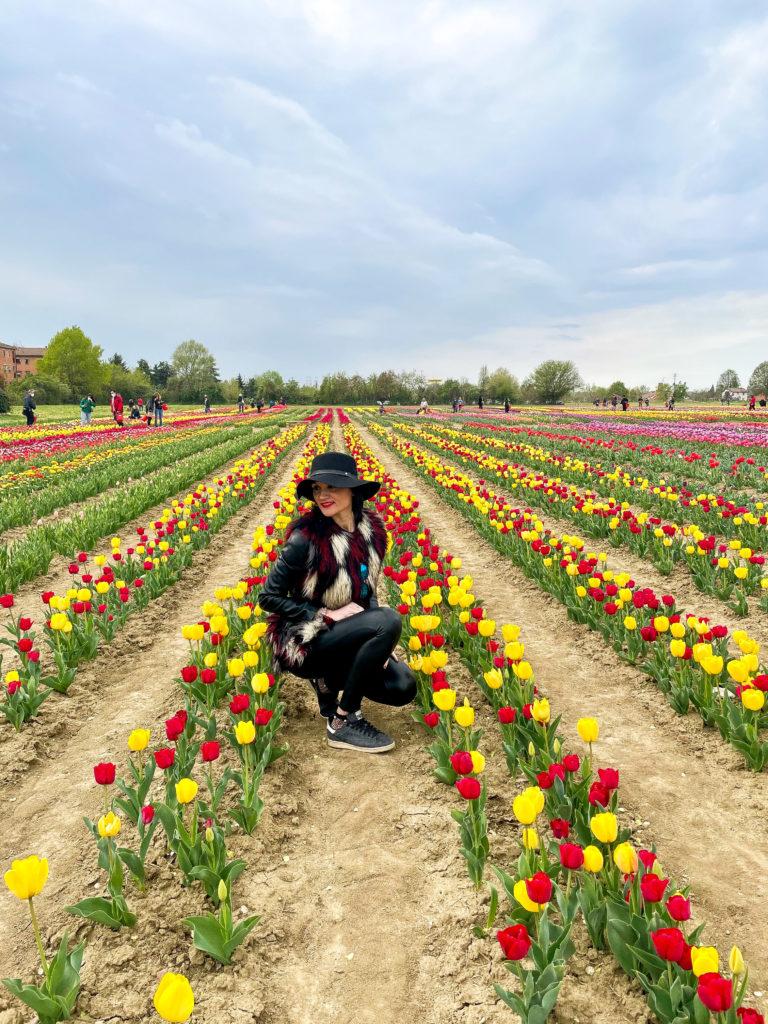 Il vivaio di tulipani recentemente inaugurato a Bologna, nel quartiere navile