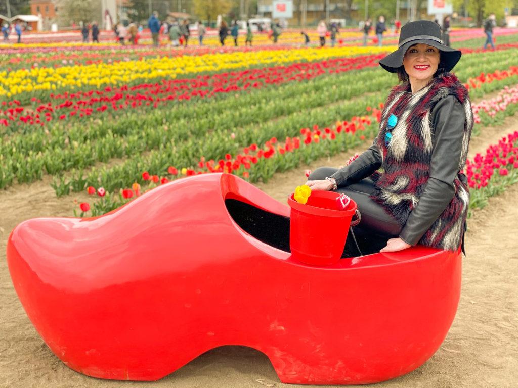 lo zoccolo olandese tra i tulipani sboccati a Bologna al quartiere navile
