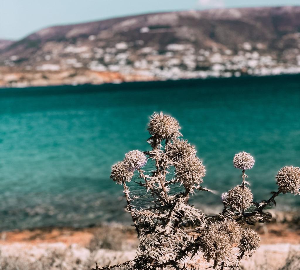 Paros è un'isola tutta da scoprire perché oltre alla vita notturna, ha anche molte spiagge incontaminate perfette per chi vuole rilassarsi in tranquillità