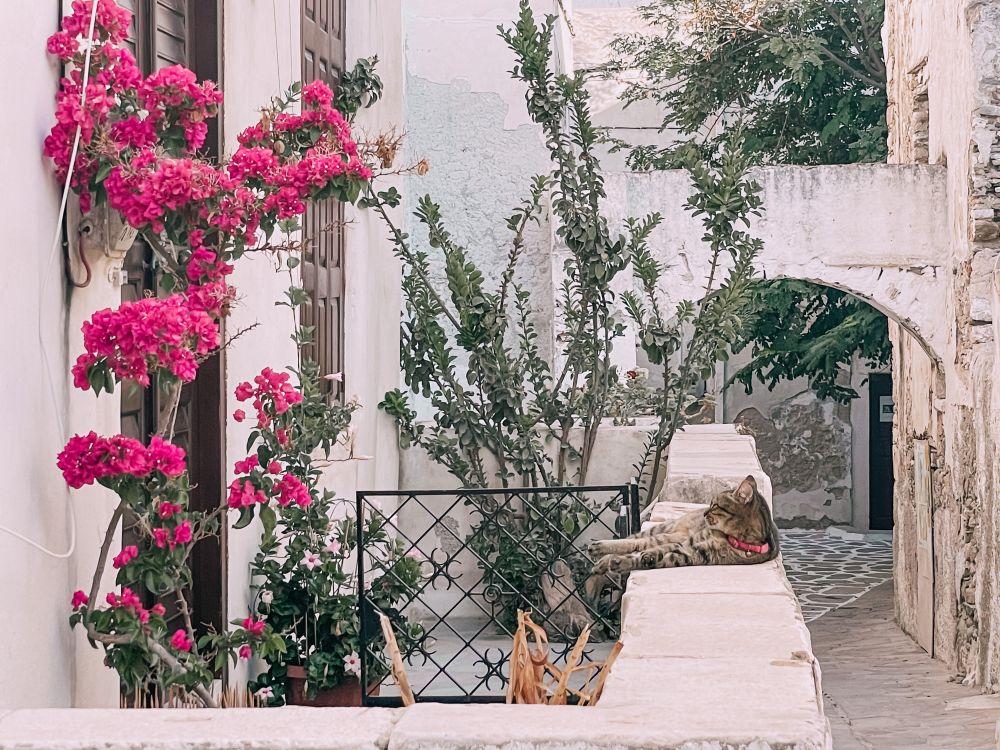 una cosa da vedere a Naxos sono gli scorci del Kastro